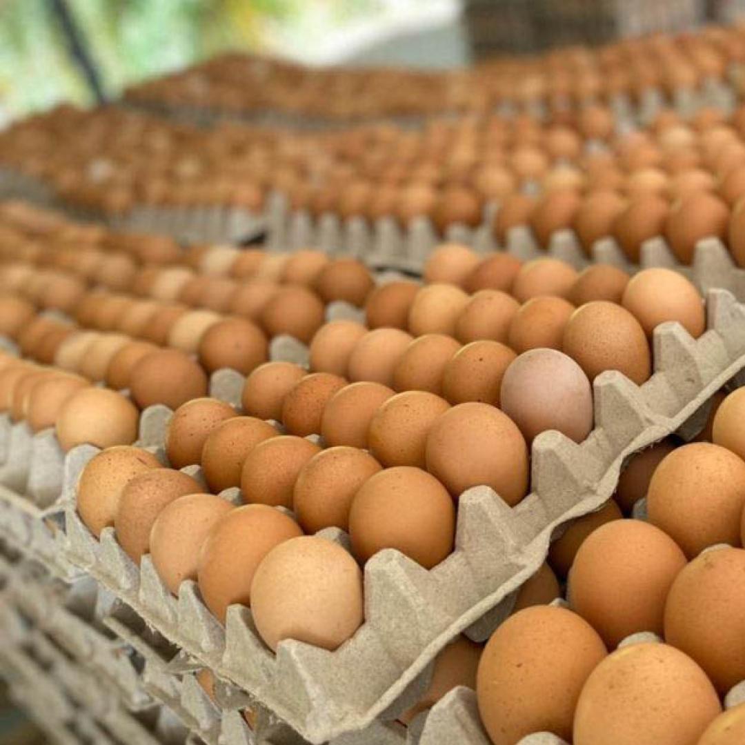 Huevos Color Medianos Por Cajon